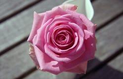 Розовый Rose от выше Стоковое Изображение RF