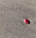 Розовый seashell изолированный на песке Стоковое фото RF