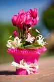 Розовый sowbread на поле кирпича в саде с смычком Стоковое Изображение