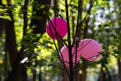 3 розовых воздушного шара игрушки на дереве клена стоковая фотография rf