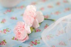 2 розовых гвоздичного дерева Стоковое Фото