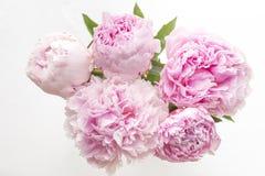 5 розовых пионов Стоковые Изображения