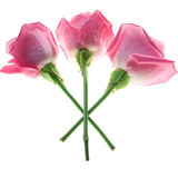 3 розовых розы изолированной на белизне стоковые изображения rf