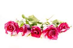 5 розовых роз с некоторым зеленым цветом Стоковая Фотография
