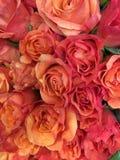 Розы апельсина букета Стоковое фото RF