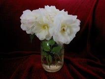 розы белые Стоковое Изображение RF
