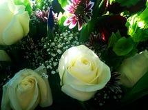 розы белые Стоковые Изображения