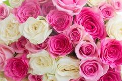 розы букета свежие Стоковые Изображения RF