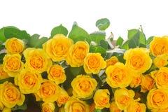 розы букета свежие Стоковое фото RF