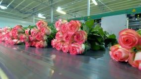 Розы будучи сортированным на фабрике цветка акции видеоматериалы