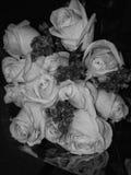 Розы валентинок Стоковые Изображения RF