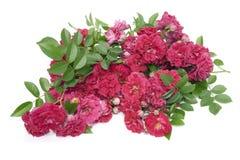 розы вороха красные стоковое изображение