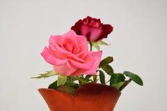 2 розы в керамической вазе для цветков Стоковое фото RF