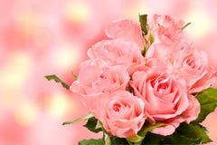 розы граници розовые Стоковое Изображение