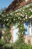 розы деревенского дома Стоковое фото RF