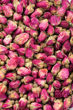 Розы для чая Стоковые Фото