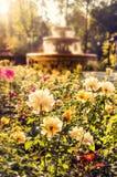 Розы и фонтан стоковая фотография rf