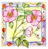Розы и Rosehips Стоковые Фото