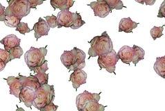 розы картин цветков 6 вариантов стоковые изображения rf