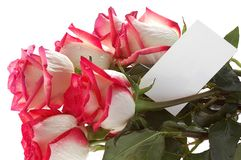 розы карточки букета Стоковое Изображение