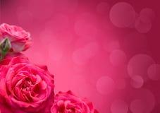 розы конструкции граници Стоковые Изображения