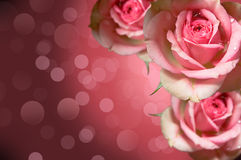 розы конструкции флористические Стоковые Фотографии RF