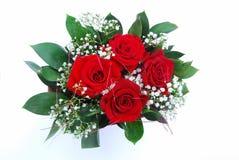 розы красного цвета пука Стоковые Изображения