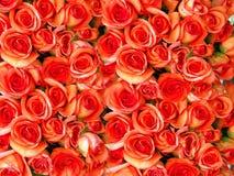 розы кровати Стоковая Фотография