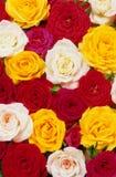 розы кровати Стоковая Фотография RF