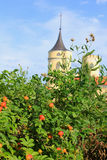 Розы кустарника и старый замок стоковые изображения