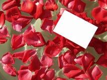 розы лепестка Стоковая Фотография RF