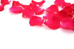 розы лепестков Стоковые Изображения RF