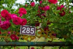 Розы лета на садах общины стоковые изображения rf