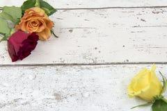 3 розы на белой деревянной предпосылке влияния с космосом экземпляра Стоковые Изображения