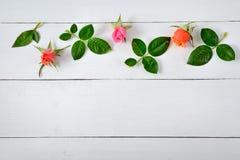 Розы на белой деревянной предпосылке Стоковое Изображение