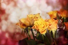Розы на светлой предпосылке Стоковое Фото