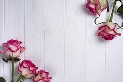 Розы обрамляют на деревянной белой предпосылке Стоковое Фото