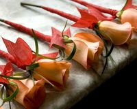 розы определяют запружено Стоковое фото RF