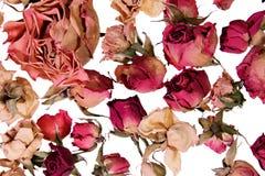 розы памятей предпосылки сухие Стоковое Фото