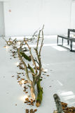 розы перлы приглашения украшения декора карточки boutonniere предпосылки wedding белизна Оформление древесины на поле Дерево на п Стоковая Фотография