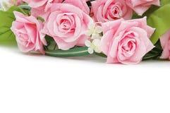 розы полисмена используют белизну Стоковое Фото