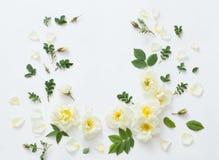 розы предпосылки белые Стоковая Фотография