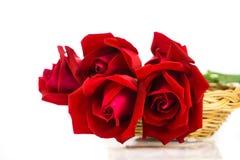 розы предпосылки красные белые Стоковые Фото