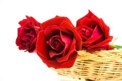 розы предпосылки красные белые Стоковое Фото