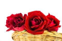 розы предпосылки красные белые Стоковая Фотография RF