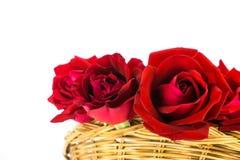 розы предпосылки красные белые Стоковое Изображение