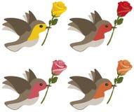 розы птиц Стоковые Изображения