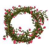 розы рамки розовые Стоковая Фотография RF