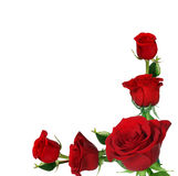 розы рамки Стоковое Изображение RF