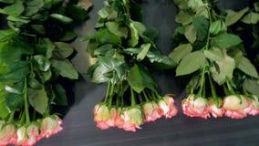 Розы связанные вверх на транспортере над взглядом видеоматериал